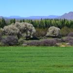 Badsfontein