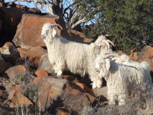 Driehoeksfontein, Murraysburg